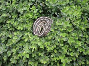 SnakeImage1