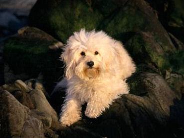dog_Image10