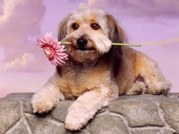 dog_Image3
