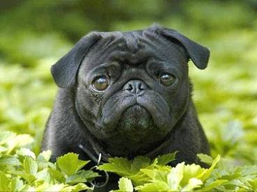dog_Image6