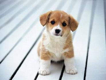 dog_Image7
