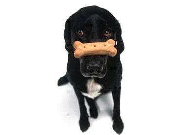 dog_Image8